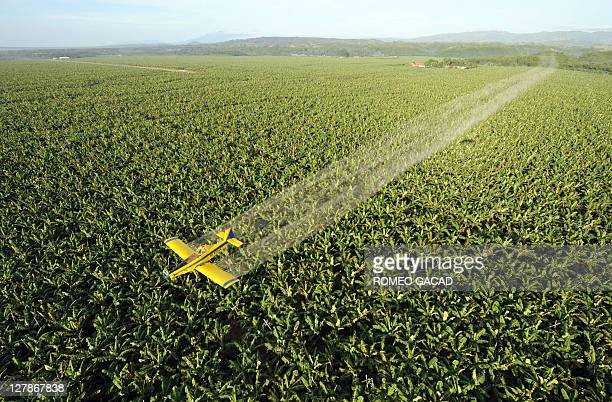 Picture taken on April 22 2008 of a crop duster plane spraying fungicide to protect the 7000 hectare banana plantation of Tagum Agricultural...
