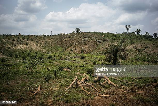 A picture taken on April 28 2016 shows broken trees due to the intense deforestation intended for land clearing for palm oil production in a patch of...