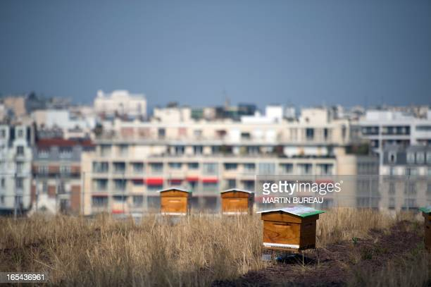 A picture taken on April 4 2013 shows beehives placed on the green vegetated roofs of the 'Beaugrenelle Paris' shopping mall during their...