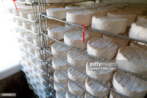 A picture taken on August 24 2016 at the Fromagerie Durand in the Normandy's village of Camembert northwestern France shows freshly made camembert...