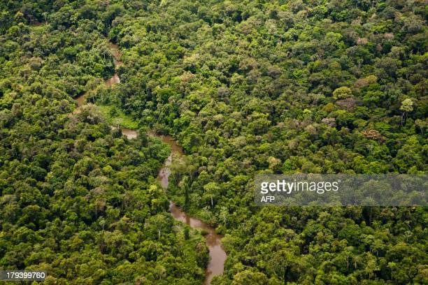 A picture taken on August 26 2013 shows a river in the Amazonian forest near Saul a tiny village in French Guiana Located at 180 kms south of Cayenne...