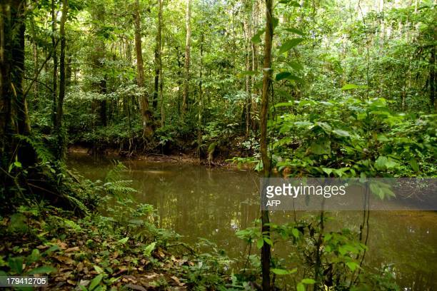 A picture taken on August 26 2013 shows the Amazonian forest around Saul a tiny village in French Guiana Located at 180 kms south of Cayenne Saul is...
