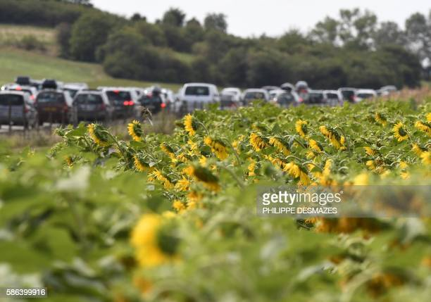 A picture taken on August 6 2016 shows a field of sunflowers next to traffics jams between Vienne and Valence on the A7 motorway in Vienne...