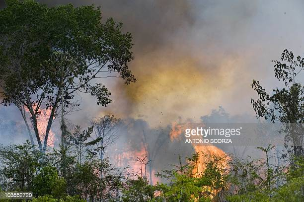 Picture taken on December 1 2009 while a fire burns part of the 500 thousand hectares of the Tapajos National forest along route BR163 between...