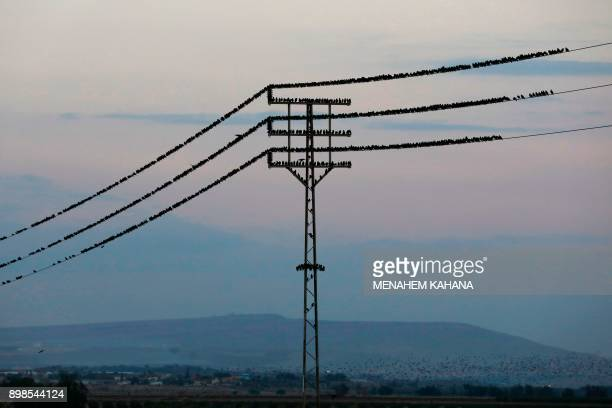 A picture taken on December 25 2017 shows starlings standing on an electricity cable near the Israeli city of Beit Shean in the Jordan Valley / AFP...