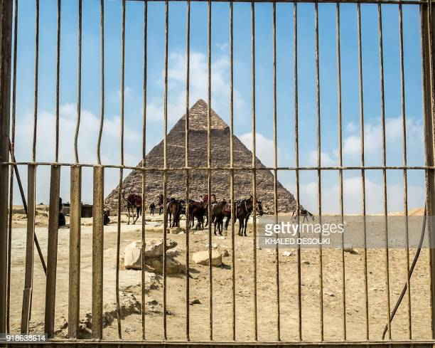 A picture taken on February 15 2018 shows horses standing in front of the Pyramid of Khafre at the Giza pyramids complex on the southwestern...