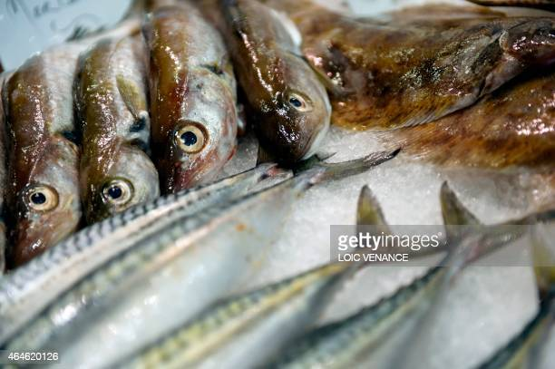 A picture taken on February 26 2015 shows fresh fish during the Paris international agricultural fair at the Porte de Versailles exhibition center in...