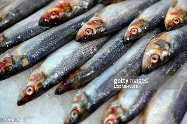 A picture taken on February 26 2015 shows fresh sardine fish during the Paris international agricultural fair at the Porte de Versailles exhibition...