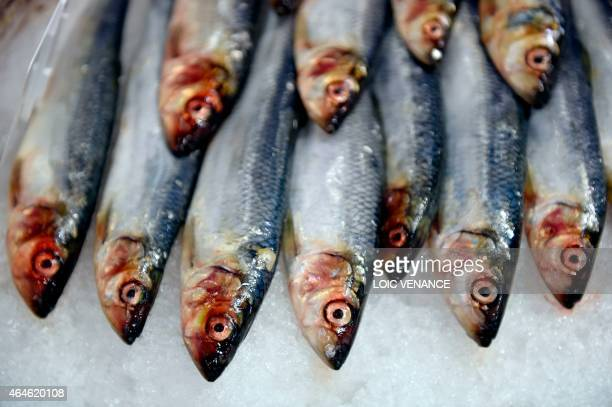 A picture taken on February 26 2015 shows sardines fish during the Paris international agricultural fair at the Porte de Versailles exhibition center...