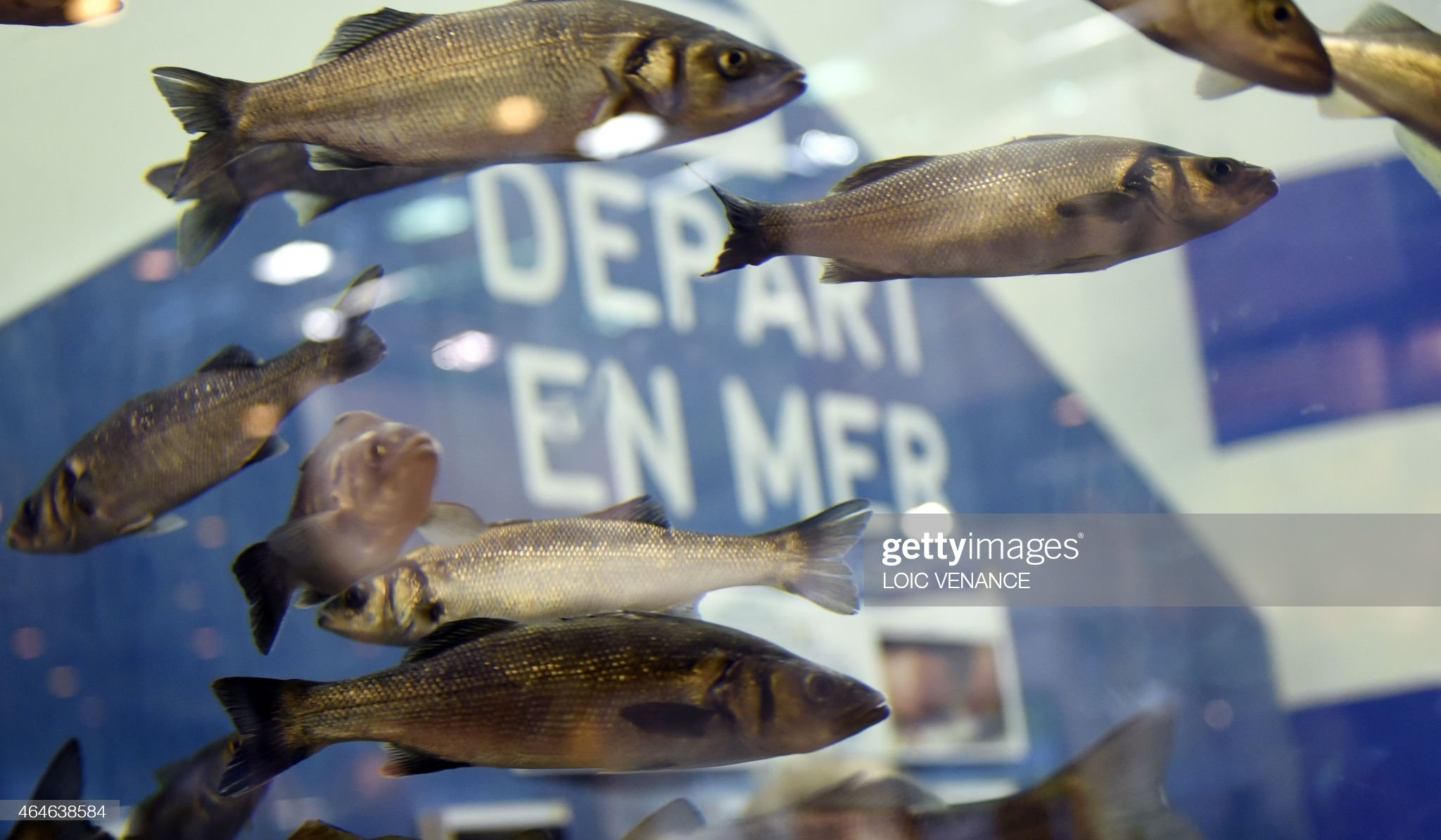 Inhibition of cytochrome P450 enzymes by enrofloxacin in the sea bass <i>(Dicentrarchus labrax)</i>