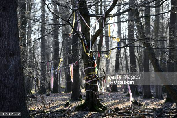 Picture taken on January 16 2020 shows trees of the Hambacher Forst forest decorated by environmentalists near Buir and Niederzier western Germany A...