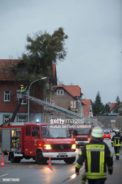 A picture taken on January 18 2018 in Wernigerode northern Germany shows firefighters working to cut a tree after it fell on a house due to strong...