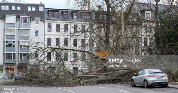 A picture taken on January 18 2018 shows a fallen tree blocking a road Leipzig in eastern Germany after the region was hit by strong winds Violent...