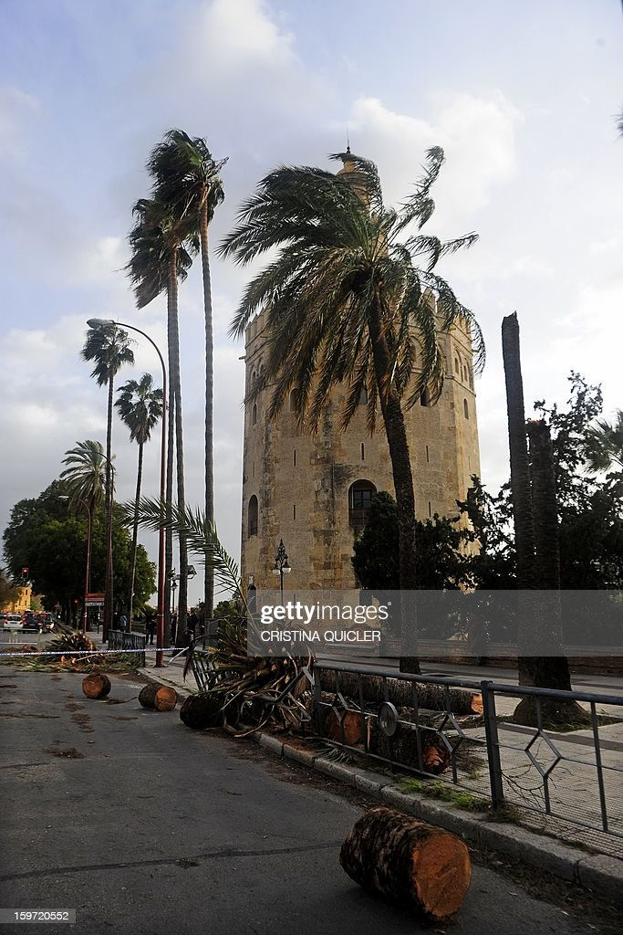 A picture taken on January 19, 2013 shows broken trees in Sevilla after the city was hit by strong wind. The Spanish interior ministry issued an alert for the weekend, warning of snow and rain storms across the country with winds up to 100 kilometres per hour (62 mph) and rough seas in the Mediterranean.