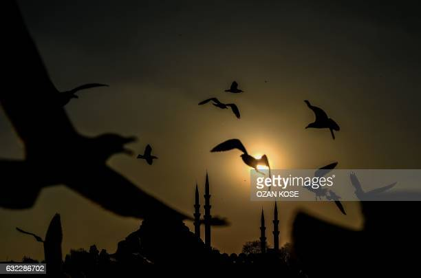 A picture taken on January 21 2017 shows seagulls flying in the sky of the karakoy district and by the Suleymaniye Mosque during sunset in Istanbul /...