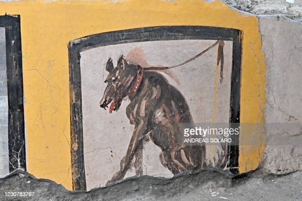 """Picture taken on January 25, 2021 shows a fresco decoration displayed in the new area of the """"Thermopolium """" at the archaeological site of Pompeii,..."""