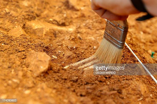 A picture taken on July 11 2013 shows a paintbrush as workers carry out an excavation of the Gran Dolonia site at the Archaeological Site of...