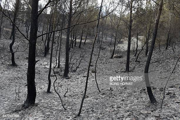 A picture taken on July 14 2016 shows a part of the devastated 150 hectares by a fire due to strong winds in ChateauneuflesMartigues southeastern...