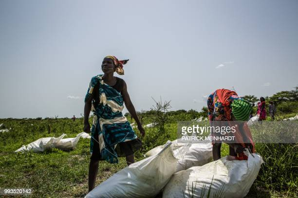 TOPSHOT A picture taken on July 3 shows women collecting sacks of maize and sorghum dropped from air by a World Food Programme plane in Jeich village...