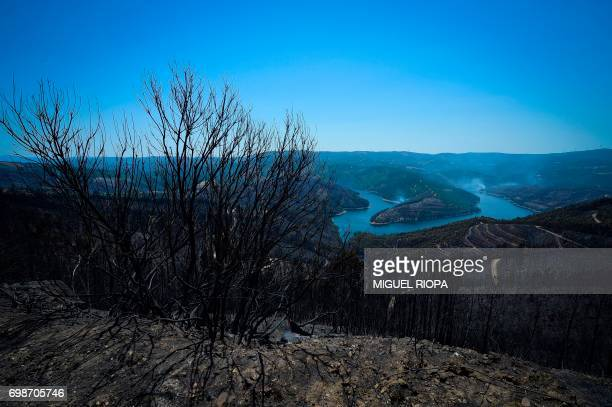 TOPSHOT A picture taken on June 20 2017 shows a burnt area of Vale do Cambra some 30 km to Pedrograo Grande after being affected by a forest wildfire...