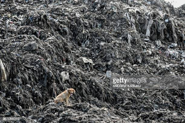 TOPSHOT A picture taken on June 3 shows a dog siting by heaps of plastic waste at Kibarani dump site in Mombasa On June 5 2018 the United Nations...