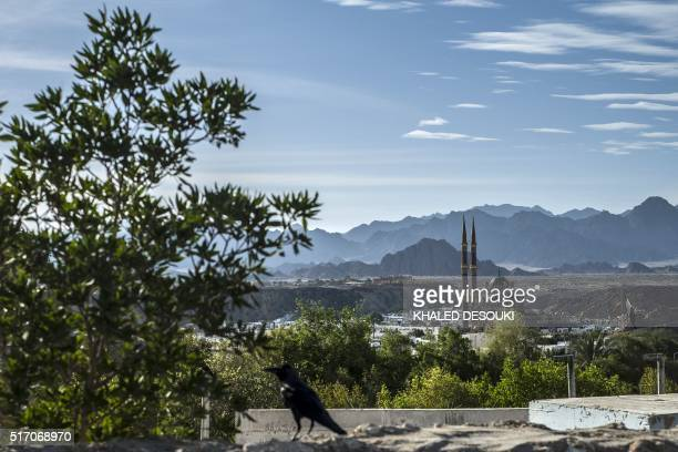 A picture taken on March 23 2016 shows a general view of the Egyptian Red Sea resort of Sharm ElSheikh where alSahaaba mosque is seen surrounded by...