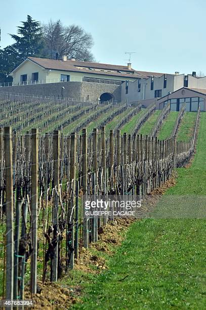 A picture taken on March 24 2015 shows the wineyard at the Bepin de Eto cellar in San Pietro di Feletto near Conegliano If there was one tipple wine...