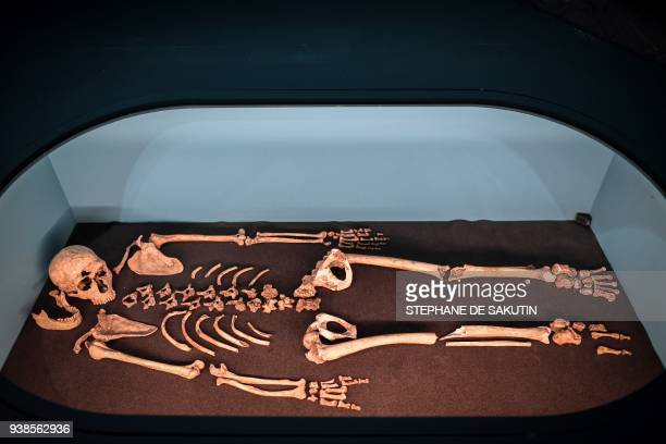 Picture taken on March 26, 2018 shows the skeleton of La Ferrassie 1 male displayed for the Neanderthal exhibition at the Musee de l'Homme in Paris....