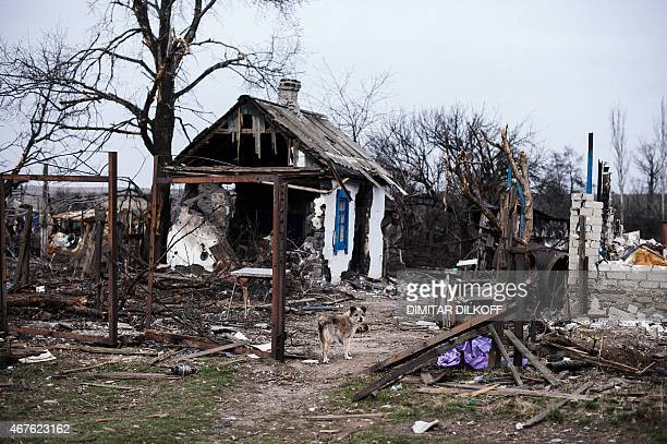 Picture taken on March 26 shows an abandoned dog in the village of Lohvynove near the eastern Ukrainian town of Debaltseve. The United States fears...
