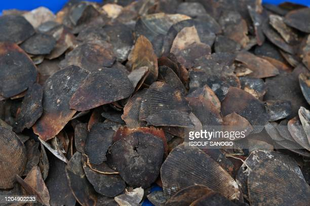 A picture taken on March 3 2020 shows pangolin scales seized from poachers in 2017 and 2018 and burnt by the Ivory Coast's Waters and Forests...