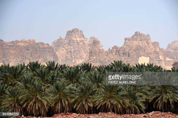 A picture taken on March 31 2018 shows a date farm amidst sandstones in the Khuraiba archaeological site near Saudi Arabia's northwestern town of...