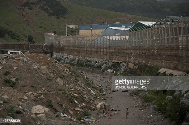 A picture taken on March 5 2014 shows the border fence between Morocco and Spain during a visit of Spain's Interior Minister in Ceuta Police stopped...