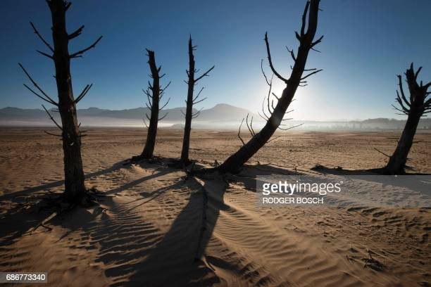 A picture taken on May 10 2017 shows bare sand and dried tree trunks standing out at Theewaterskloof Dam which has less than 20% of it's water...