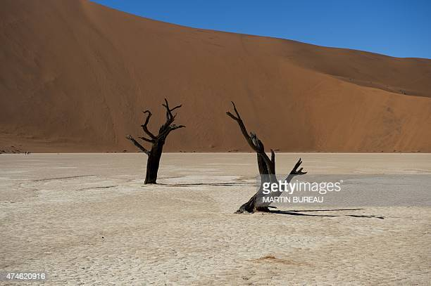 A picture taken on May 14 2015 in the Namibia Naukluft National Park near Sesriem shows dead trees of Dead Vlei in the salt desert of Sosusvlei AFP...