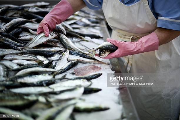 A picture taken on May 17 2014 shows sardines at 31th January market in Lisbon Portugal exits a threeyear 78billioneuro international bailout...