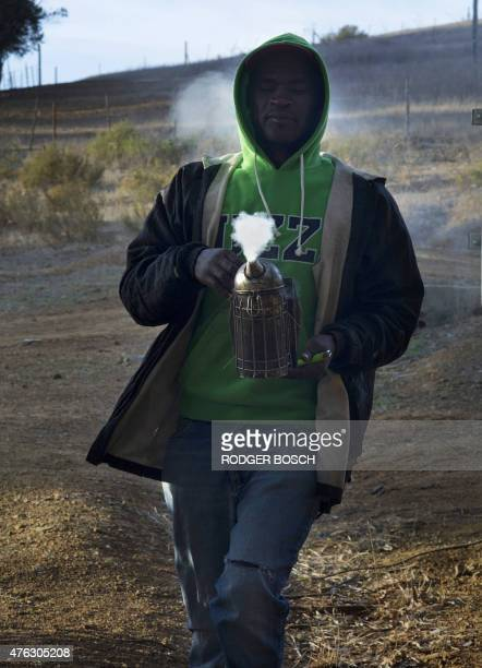 FINDLAY A picture taken on May 18 2015 shows a beekeeper carrying a smoker to facilitate inspecting bee hives suspected of having been infected with...