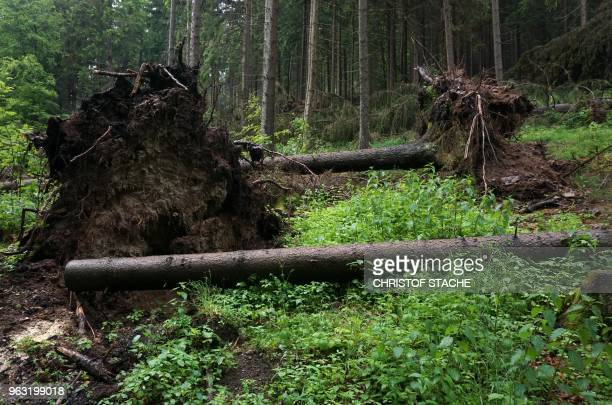 A picture taken on May 23 2018 shows uprooted trees in the Thuringian Forest near the village of ZellaMehlis Germany