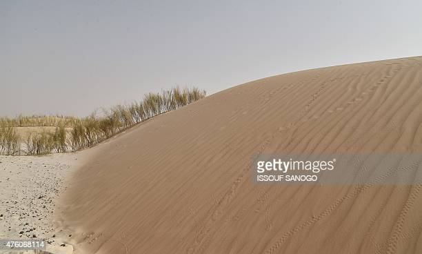 A picture taken on May 26 2015 in the countryside near the southeastern town of Diffa in Niger shows fixed dunes Dune fixation is managed by the...