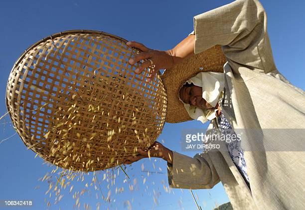 A picture taken on November 20 2008 shows a farmer winnowing rice using a handwoven basket in the village of Penarubia Abra northern Philippines This...