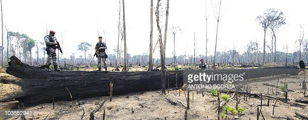 Picture taken on November 29 2009 showing National Force soldiers standing on and next to a burnt nut tree in an illegally deforested area of the...