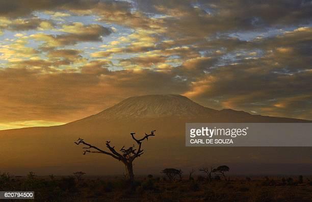 Picture taken on November 3 2016 at the Amboseli National Park shows the Mount Kilimanjaro / AFP / CARL DE SOUZA