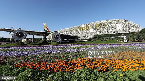 A picture taken on November 30 shows an Emirates Airbus A380 turned into a floral installation at the Dubai Miracle Garden / AFP / KARIM SAHIB