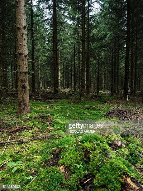 Picture taken on October 14 2016 shows a forest near Rodacherbrunn central Germany where the skeleton of nineyearold Peggy Knobloch was found in July...
