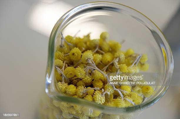 A picture taken on October 24 2013 shows Helichrysum stoechas flowers named 'Immortelle' in French displayed in the research laboratory at French...