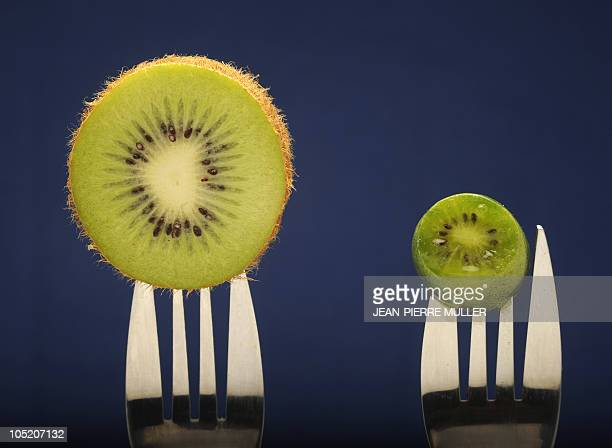 BIG PLANS FOR FRANCE'S MINIKIWI FRUIT A picture taken on October 4 2010 shows two kiwis in Labatut southwestern France It's smaller than a kumquat...