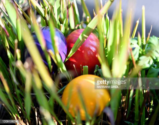 Picture taken on Palm Sunday, on April 5, 2020 in Salzburg shows colourful hard boiled eggs on the grass, as easter celebrations this year will be...