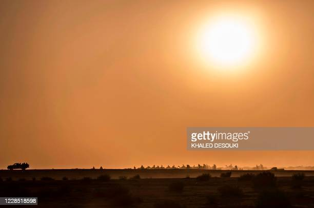 Picture taken on September 12, 2020 shows the Camel race at Ramala area in South Sinai governorate in the southern part of Egypt's eastern Sinai...