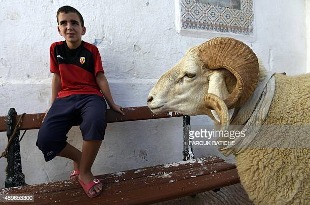 A picture taken on September 21 2015 shows an Algerian boy sitting in the old part of Algiers known as the 'Kasbah' next to a ram bought to be...