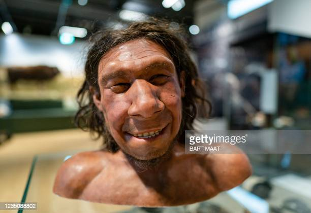 Picture taken on September 6, 2021 shows the reconstruction of the face of the oldest Neanderthal found in the Netherlands, nicknamed Krijn, on...