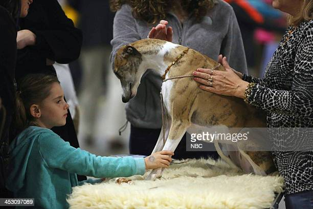 A child plays with a dog at the 12th Annual Nation Dog Show Presented by Purina in Philadelphia PA 2013